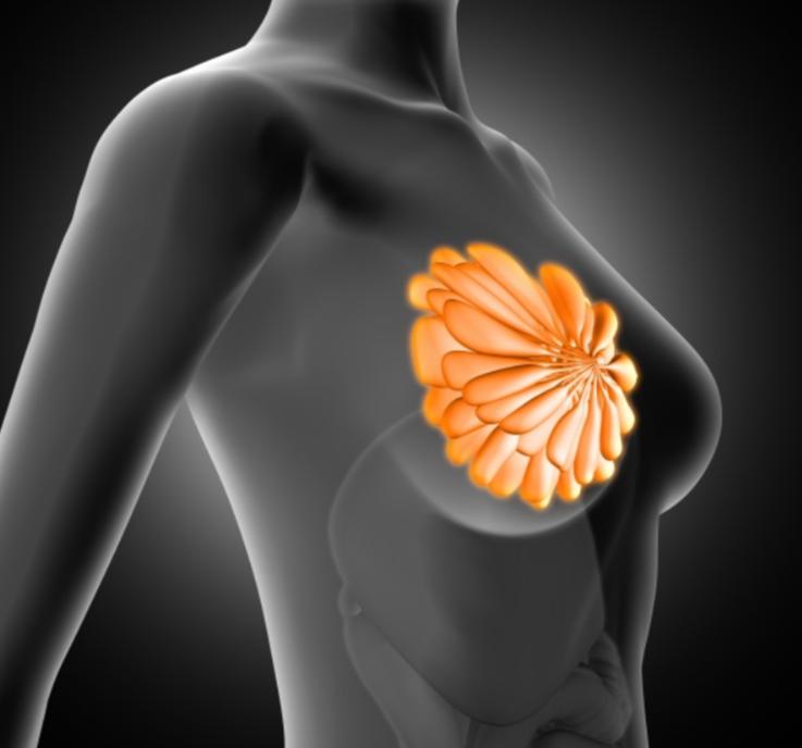 Women's Breast